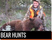 Bear Hunts in Montana