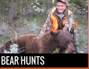 Bear Hunts in Montana